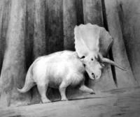 <I>Titanoceratops</I> Illustration