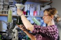 Testing Seaweed Extract