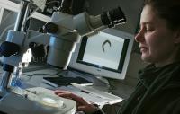 Dr. Kim Zarse, Friedrich-Schiller-Universitaet Jena