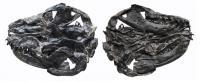 <i>Liaoconodon hui</i> Skull