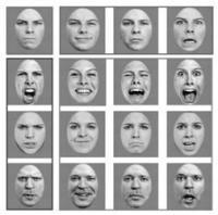 Human Face Stimuli