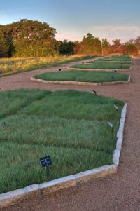Lawn Research Plots