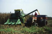 Corn Harvesting
