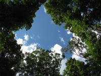 Canopy Gap