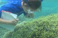 Guam Coral