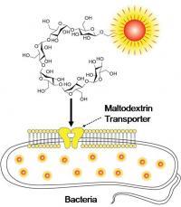 Maltodextrin-based Imaging Probes
