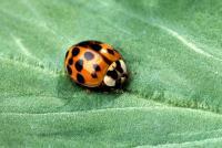 Ladybug Chemicals
