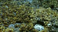 Mussel Beds