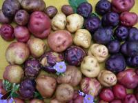 Canary Island Potatoes
