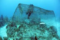 Enclosing Reef Fish