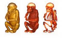 Great Ape Virtopsy