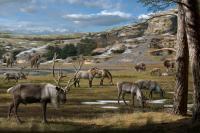 The Pleistocene Landscape