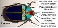 Cyborgbug (2 of 2)