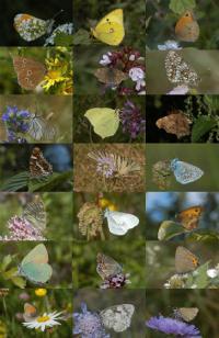 The Diversity of European Butterflies