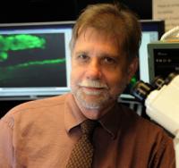 Dr. Paul McNeil, Georgia Health Sciences University