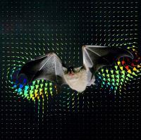 Cover of Science --  A Bat, <i>Glossophaga soricina</i>