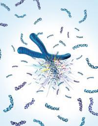 Exploding Chromosome