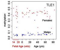 Lifespan Methylation by Gender
