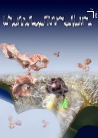 Antibody‑Selective Nanopore