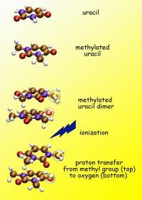 Proton Transfer in Ionized Dimethyluracil