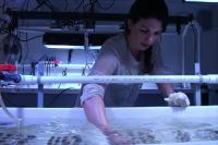 Rachel Silverstein, University of Miami Rosenstiel School of Marine & Atmospheric Science