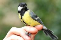 Wild Bird Spring