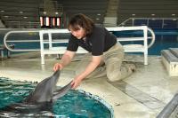 Dolphin Mercury
