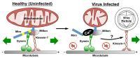 Virus Hijack