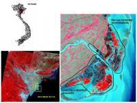 Vietnam's Vanishing Mangrove Habitat