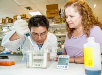 Jian Chen and Kathleen Gallo, Michigan State University