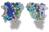 Rhomboid Enzyme (1 of 2)