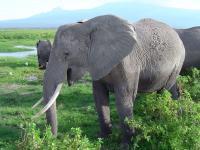 Elephant (1 of 3)