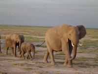 Elephant (2 of 3)