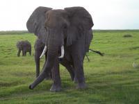 Elephant (3 of 3)