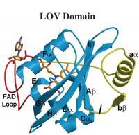 Vivid Protein