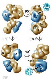 PRC2 Complex in 3-D