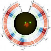 <i>Arabidopsis</i> Methylated Genome