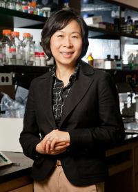 University of Illinois Molecular and Integrative Physiology Professor Jongsook Kim Kemper