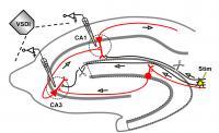 Trisynaptic-circuit Hippocampus