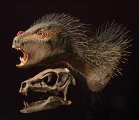 Flesh Model and Skull
