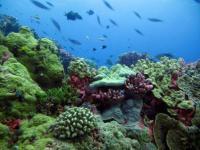 Vibrant Corals