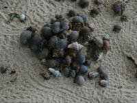 Hermit Crab Mosh Pit