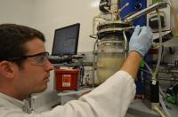 Fermenting <i>Clostridium</i> bacteria