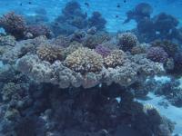 Different Marine Species (1 of 2)
