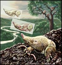 <i>Necrolestes patagonensis</i>