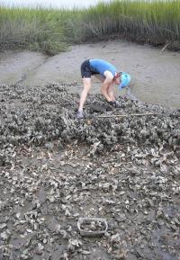 Examining Oyster Reefs