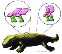 <i>Ichthyostega</i> Tetrapod