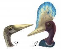 Pterosaur <i>Darwinopterus</i>