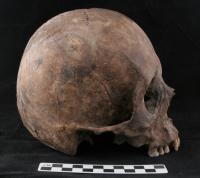 Image of Otomi Skull