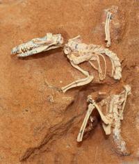 Fossil Specimen